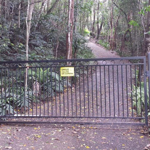 Rainforest Driveway